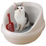 えっ?知らなかった>猫のウンチは水に溶けない>トイレに流してはダメ!